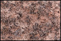 Close-up of knobby black crusts of cryptobiotic soil. Canyonlands National Park ( color)