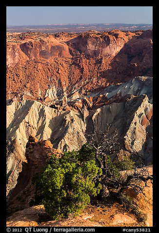 Juniper and Upheaval Dome. Canyonlands National Park (color)