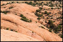 Whale Rock slickrock from above. Canyonlands National Park, Utah, USA. (color)