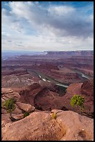 Colorado River from Dead Horse Point, morning. Canyonlands National Park, Utah, USA.