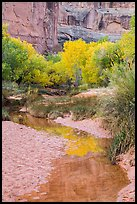 Cottonwoods in fall foliage reflected in creek, Horseshoe Canyon. Canyonlands National Park, Utah, USA.