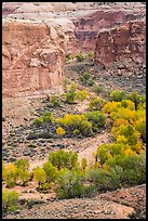 Horseshoe Canyon from the rim in autumn. Canyonlands National Park, Utah, USA. (color)