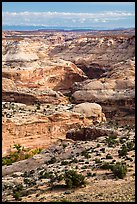 Horseshoe Canyon seen from above. Canyonlands National Park, Utah, USA. (color)