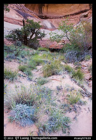 Wildflowers, trees, and canyon walls. Canyonlands National Park (color)