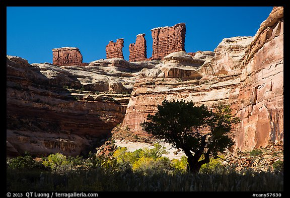 Trees below the Chocolate Drops, Maze District. Canyonlands National Park (color)
