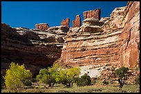 Cottonwoods, canyon walls, and Chocolate Drops. Canyonlands National Park ( color)