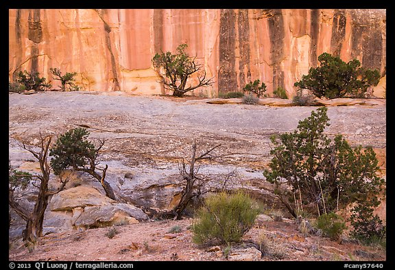 Junipers and rock walls, the Maze. Canyonlands National Park (color)