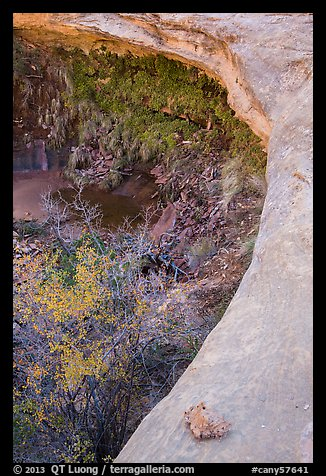 Alcove with pool and hanging vegetation, Maze District. Canyonlands National Park (color)