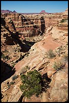 Maze canyons and Eckert Butte. Canyonlands National Park, Utah, USA.