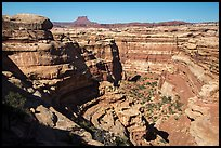 Curved Cedar Mesa sandstone canyons from the rim, Maze District. Canyonlands National Park, Utah, USA.