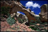 Hickman Bridge, 130 foot span. Capitol Reef National Park, Utah, USA. (color)