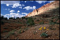 Wildflowers Waterpocket Fold, and clouds. Capitol Reef National Park, Utah, USA.