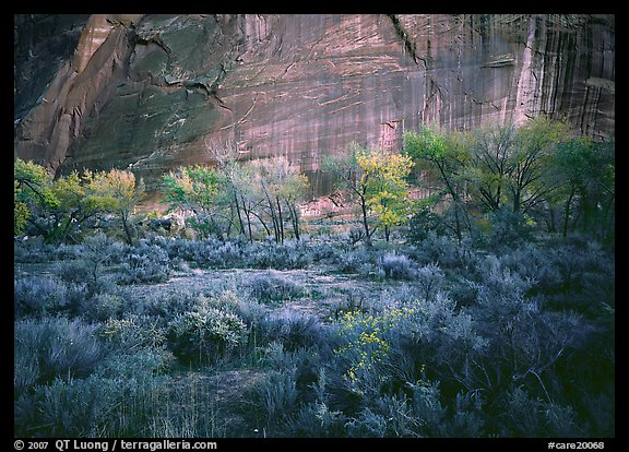 Sagebrush, trees, and cliffs with desert varnish at dusk. Capitol Reef National Park (color)