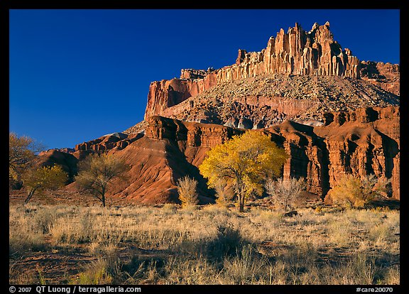 Cottonwods in fall colors at the base of the Castle. Capitol Reef National Park (color)