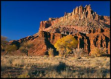 Cottonwods in fall colors at the base of the Castle. Capitol Reef National Park, Utah, USA. (color)