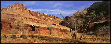 Cottonwoods in fall and Castle rock formation. Capitol Reef National Park (Panoramic color)