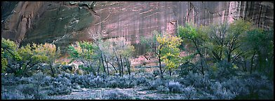 Sagebrush, trees and cliffs with desert varnish. Capitol Reef National Park, Utah, USA. (color)