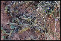 Close-up of ground with flowers, grasses and cactus. Capitol Reef National Park, Utah, USA.