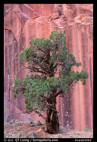 Tree and rock wall, Grand Wash. Capitol Reef National Park (color)