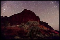 Trees and cliff by night. Capitol Reef National Park, Utah, USA. (color)