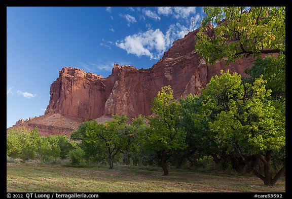Historic orchard and cliffs, late summer. Capitol Reef National Park (color)