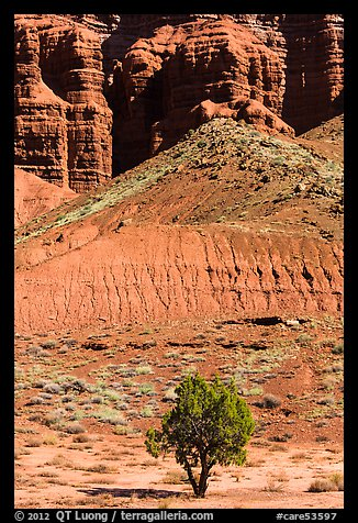 Tree and cliff near Panorama Point. Capitol Reef National Park (color)