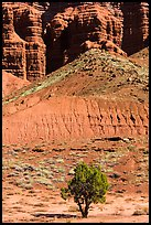 Tree and cliff near Panorama Point. Capitol Reef National Park, Utah, USA. (color)
