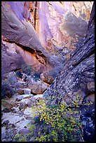 Leaves and patterned wall in Surprise canyon. Capitol Reef National Park, Utah, USA.