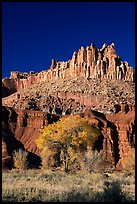 Cottonwods at the base of the Castle during fall. Capitol Reef National Park, Utah, USA.