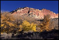 Trees in colors and cliffs near Fruita. Capitol Reef National Park, Utah, USA.