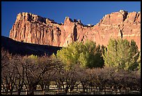 Historic orchard and cliffs. Capitol Reef National Park ( color)
