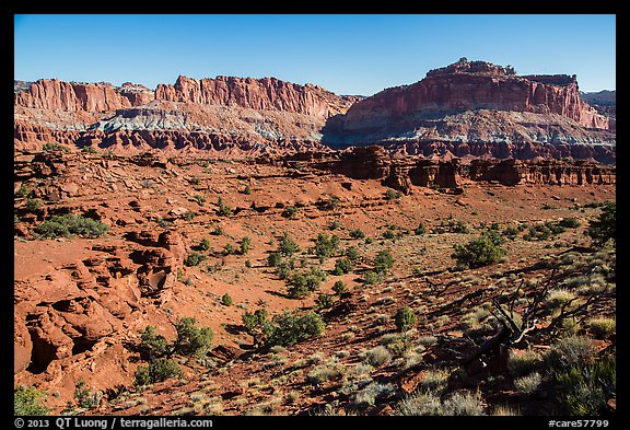 Junipers and Mummy cliffs. Capitol Reef National Park (color)