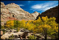 Autumn colors below Capitol Dome. Capitol Reef National Park, Utah, USA. (color)