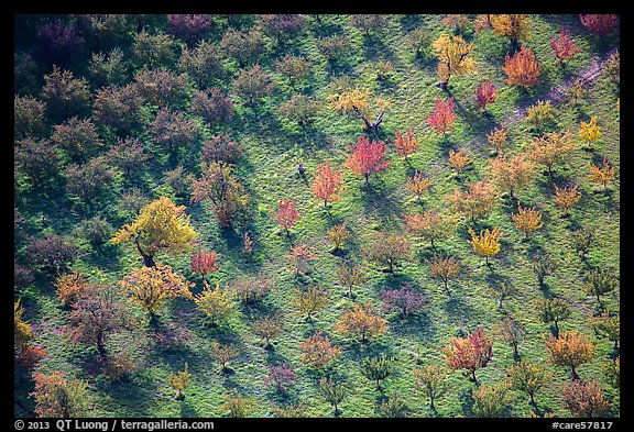 Orchard trees in autumn from above. Capitol Reef National Park (color)