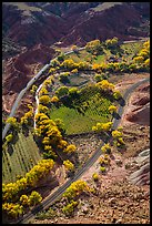 Fruita orchards in the fall, seen from above. Capitol Reef National Park, Utah, USA. (color)