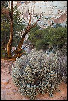 Desert vegetation on North Rim. Capitol Reef National Park, Utah, USA. (color)