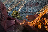 Juniper and cliffs on rim of Sulfur Creek Canyon. Capitol Reef National Park ( color)