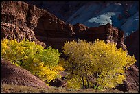 Cottonwood trees in autumn, Moenkopi Formation and Monitor Butte rocks. Capitol Reef National Park, Utah, USA. (color)