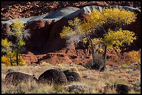 Basalt boulders, Cottonwoods in autumn, cliffs. Capitol Reef National Park, Utah, USA. (color)