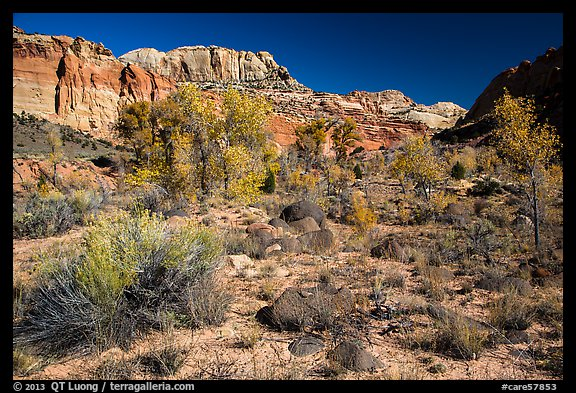 Cottonwoods and desert plants in autumn near Pleasant Creek. Capitol Reef National Park (color)
