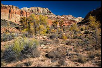 Cottonwoods and desert plants in autumn near Pleasant Creek. Capitol Reef National Park ( color)