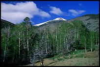 Trees and mountains, Baker Creek, morning spring. Great Basin National Park, Nevada, USA. (color)