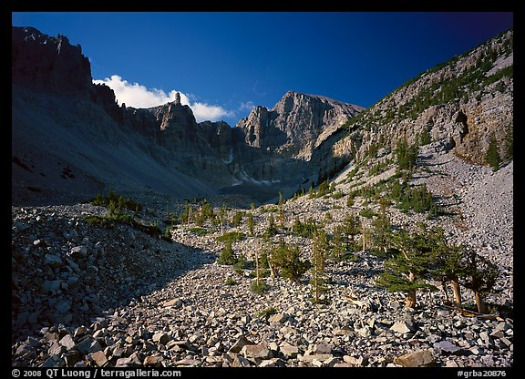 Bristlecone pine and morainic rocks, Wheeler Peak, morning. Great Basin  National Park (color)