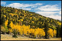 Mixed forest in autumn foliage. Great Basin National Park, Nevada, USA.