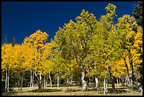 Trees in fall foliage. Great Basin National Park, Nevada, USA.