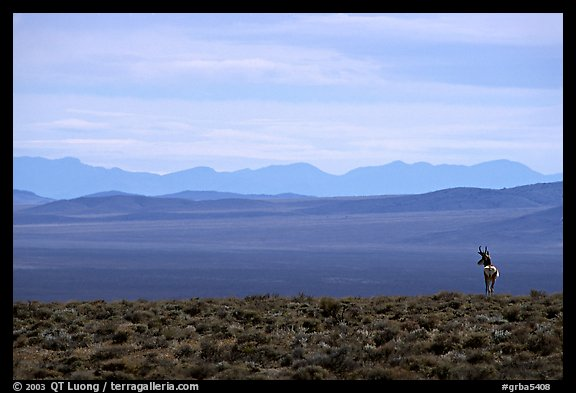 Desert antelope and hazy mountain range. Great Basin National Park, Nevada, USA.