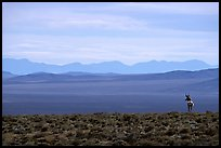 Desert antelope and hazy mountain range. Great Basin National Park, Nevada, USA. (color)