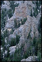 Limestone towers and pine trees near Lexington Arch. Great Basin National Park, Nevada, USA. (color)