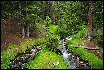 High elevation creek in summer. Great Basin National Park ( color)