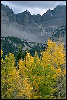 Aspens in fall color and Wheeler Peak. Great Basin National Park, Nevada, USA. (color)